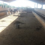 Fazenda Curral 1