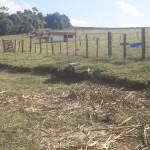 Fazenda pasto5